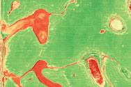 NDVI map sample